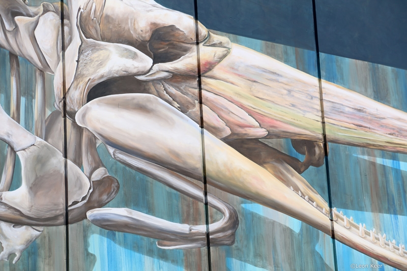 closup-potvis-denhelder-mural