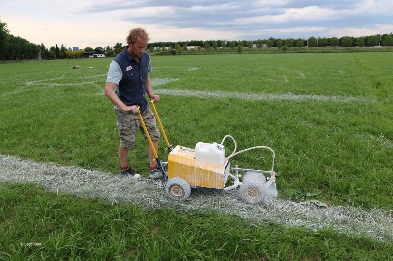 chalk-anamorphosis-grass